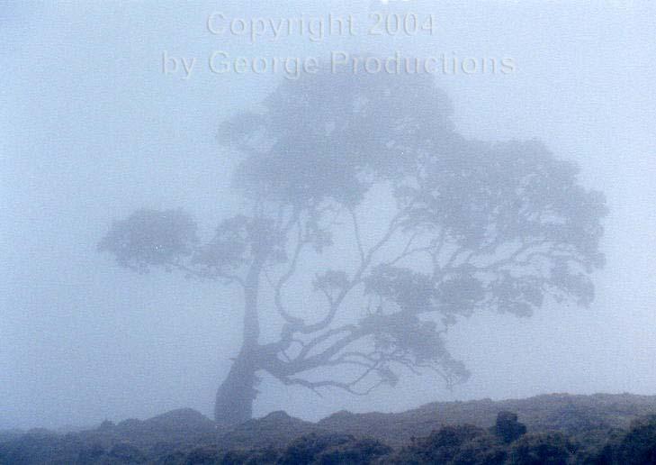 fogtree.jpg
